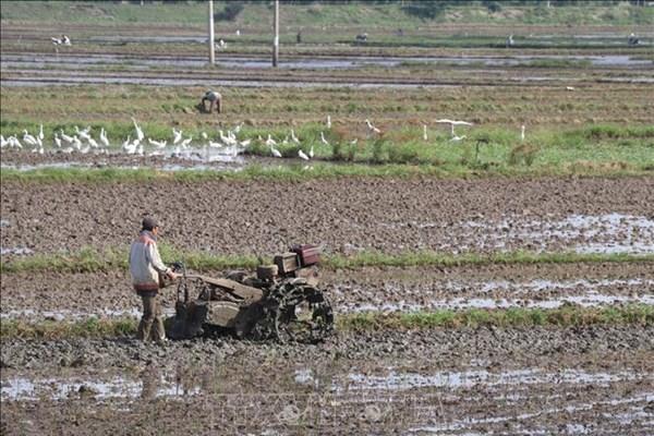 """Nông dân đầu nguồn cho đất """"nghỉ ngơi"""" mở đồng đón lũ"""