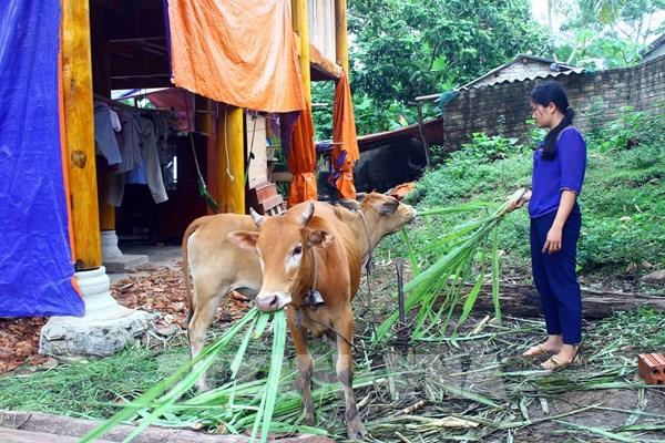 """Những ngôi làng """"ngâm chân"""" trong lũ sông Lam: Bài  cuối – Về nơi  bò thi… hoa hậu"""