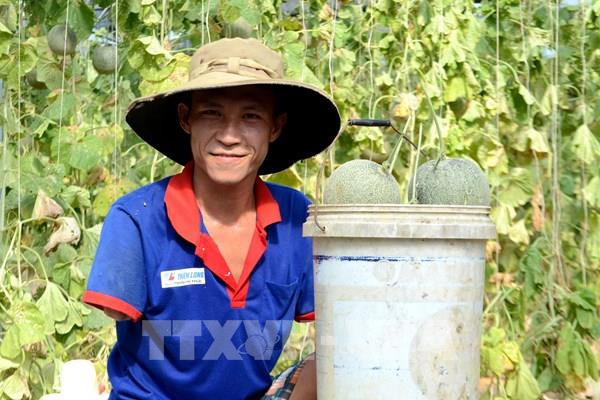 Đam mê làm nông nghiệp hữu cơ của người nông dân khuyết tật