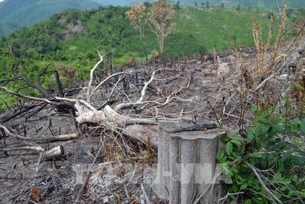 Kiểm tra, làm rõ trách nhiệm cán bộ phụ trách địa bàn bị phá rừng sau phản ánh của TTXVN