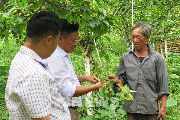 Lào Cai: Nhiều cách làm sáng tạo giúp người dân thoát nghèo