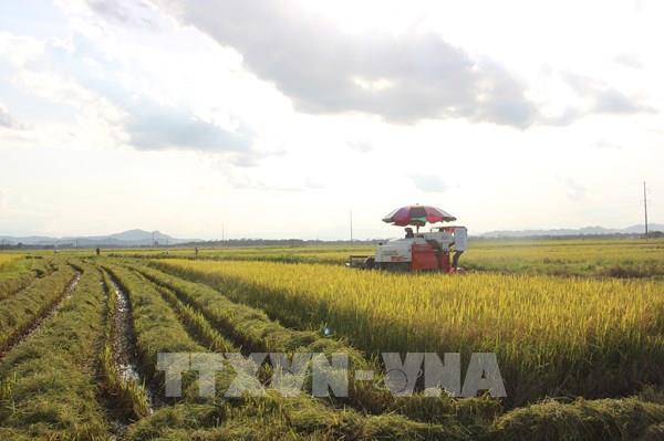 Nông nghiệp là nền tảng, trụ đỡ