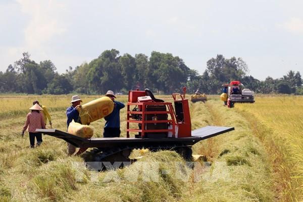 Đã có thể thực hiện chứng nhận chủng loại gạo thơm xuất khẩu sang EU