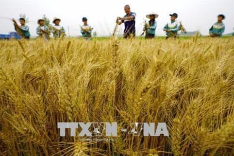 Chỉ số giá lương thực thế giới tăng tháng thứ tư liên tiếp