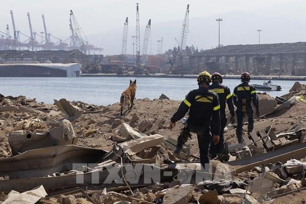 Vụ nổ ở Beirut: Phát hiện dấu hiệu sự sống sau 1 tháng xảy ra thảm họa