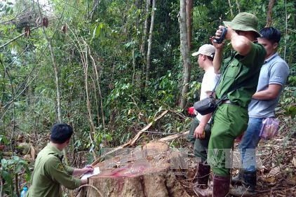 Tổng cục Lâm nghiệp: Chỉ chuyển mục đích sử dụng rừng khi không có phương án thay thế