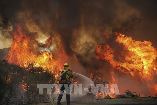 Hơn 800.000 hécta rừng ở California đã bị thiêu rụi