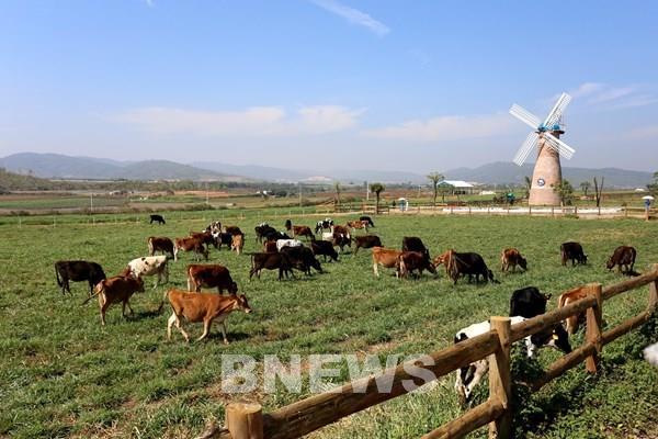 Vinamilk sẽ mở rộng quy mô hệ thống trang trại bò sữa