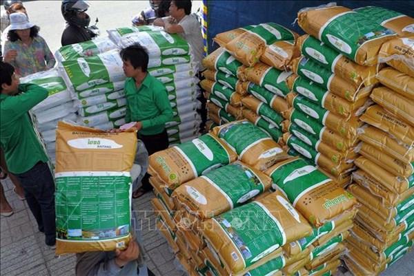 Gạo thơm Campuchia có giá cạnh tranh với gạo Việt Nam và Thái Lan