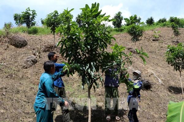 Nỗ lực giảm nghèo ở huyện vùng cao biên giới Nậm Nhùn