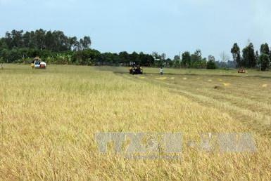 Chuyển mục đích sử dụng đất tại 2 tỉnh Vĩnh Long và Kiên Giang