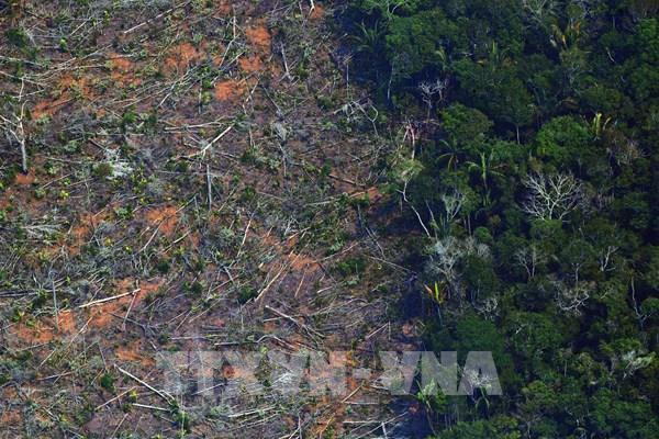 """Vùng đất ngập nước lớn nhất thế giới Pantanal tiếp tục """"kêu cứu"""""""