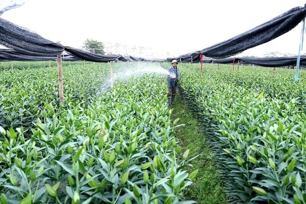 Ứng dụng công nghệ cao trong sản xuất nông sản chất lượng