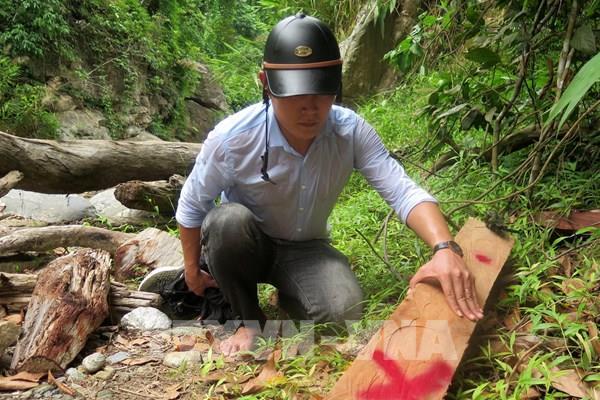 Phản hồi thông tin của TTXVN: Quảng Ngãi yêu cầu kiểm tra, xử lý tình trạng phá rừng