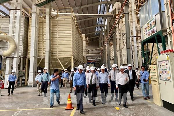 Xuất khẩu 126 tấn gạo thơm Jasmine 85 sang EU theo EVFTA