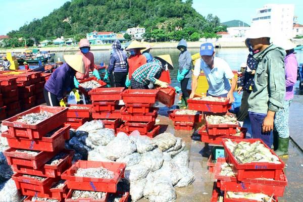 Nhộn nhịp bến cá Nghi Thủy (Nghệ An)