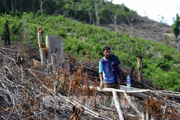 Phú Yên phản hồi thông tin TTXVN phản ánh về vụ phá rừng xã Phú Mỡ, huyện Đồng Xuân