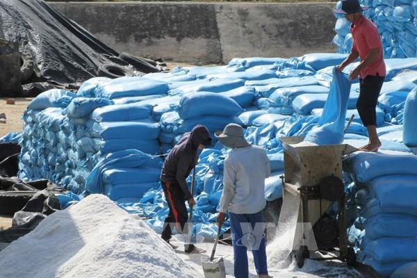 Diện tích sản xuất muối ngày càng giảm