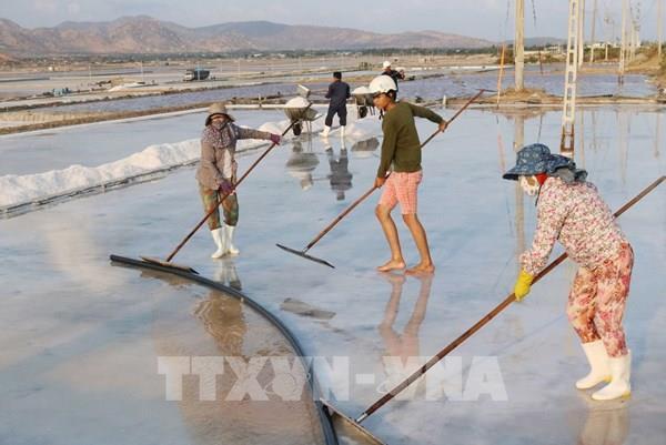 Đổi mới sản xuất để phát triển bền vững nghề muối