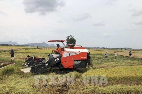 Thị trường nông sản tuần qua: Giá lúa ổn định, cà phê phục hồi