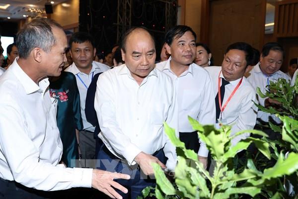 """Thủ tướng Nguyễn Xuân Phúc: Cây mắc ca """"đi sau nhưng phải về trước"""""""