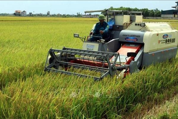 Trên 137.000 ha lúa ở Đồng bằng sông Hồng và Bắc Trung Bộ chưa thu hoạch