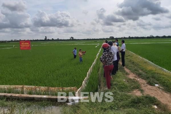 Nông dân hào hứng với việc xử lý rơm rạ bằng chế phẩm vi sinh Sumitri