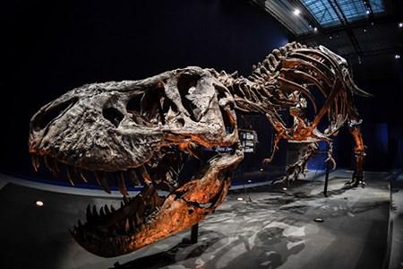 Bộ xương khủng long hoàn chỉnh nhất thế giới được bán với giá cao kỷ lục