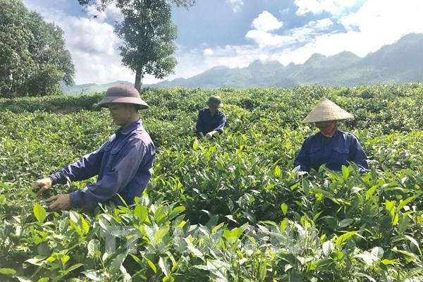 Lào Cai với các giải pháp duy trì và thúc đẩy tăng trưởng kinh tế