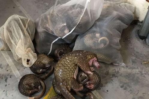 Vận chuyển trái phép động vật hoang dã bị cấm có thể bị phạt tù 15 năm