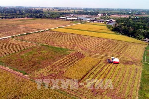 Thu hút doanh nghiệp lớn đầu tư vào nông nghiệp