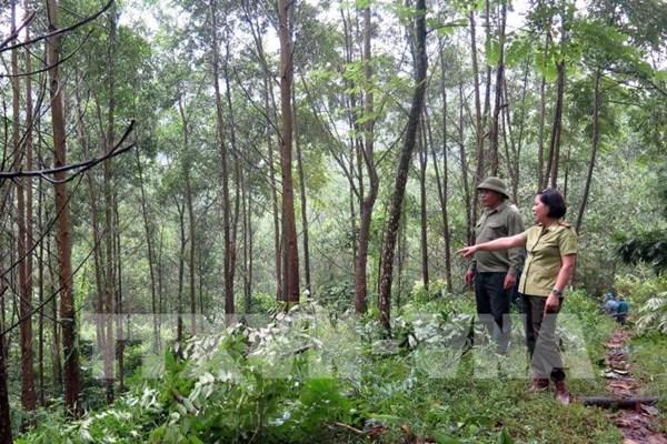 Làm gì để giám sát quản trị rừng và thương mại gỗ bền vững