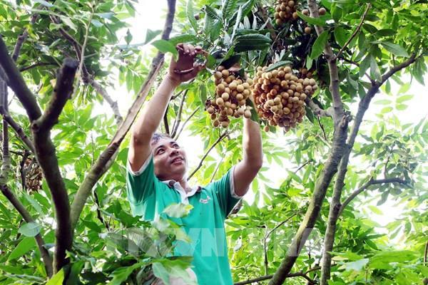 Hưng Yên coi trọng nông nghiệp công nghệ cao