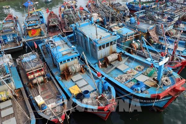 Bình Định cấm biển, ứng phó với bão số 9