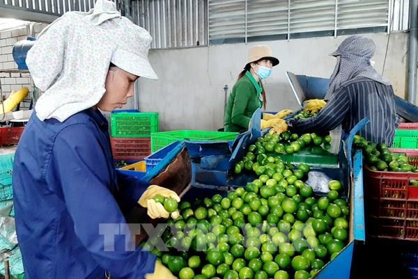 Long An đưa nông sản vào chuỗi giá trị sản xuất