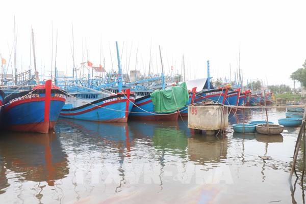 Ứng phó bão số 9: Cục Hàng hải tổ chức kiểm đếm tàu thuyền