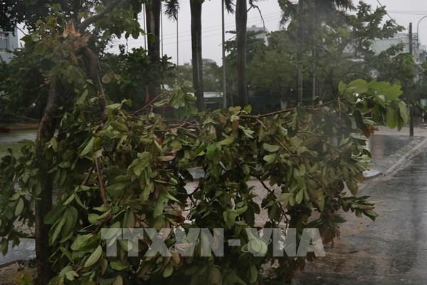 Phú Yên mưa rất to, nhiều cây xanh ngã đổ, 38 xã đang mất điện