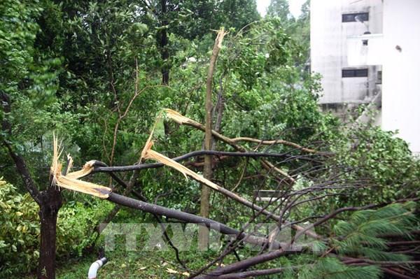 Bão số 9: Quảng Nam có gió to và mưa lớn từ 150 - 300 mm, hàng loạt cây xanh bị gãy đổ