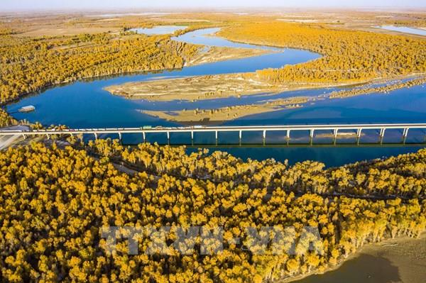 Mùa thu sang, sắc lá vàng và đỏ bao phủ ở nhiều nơi trên thế giới