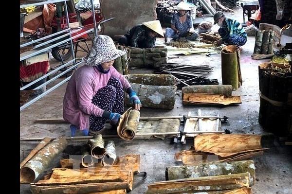 Quế Trà Bồng - Quảng Ngãi được cấp đăng ký chỉ dẫn địa lý