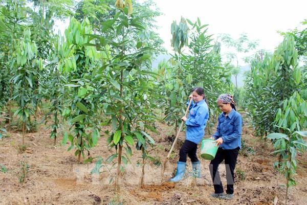 Sẽ huy động mọi nguồn lực trồng một tỷ cây xanh giai đoạn 2021 - 2025
