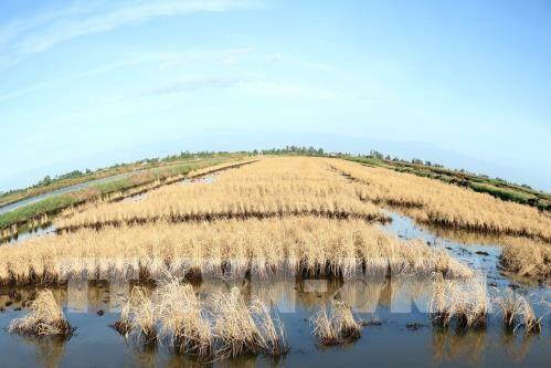 Điều chỉnh quy hoạch cấp nước vùng đồng bằng sông Cửu Long