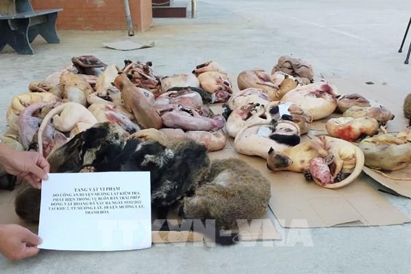 Thanh Hóa phát hiện nhà hàng tàng trữ hơn 2 tạ động vật hoang dã