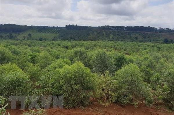 Đắk Nông đề xuất điều chỉnh cục bộ quy hoạch ba loại rừng