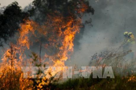 Mỹ: Hàng trăm người sơ tán do cháy rừng lớn tại bang Arizona