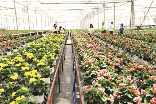 Australia hỗ trợ Việt Nam phát triển nông nghiệp công nghệ cao