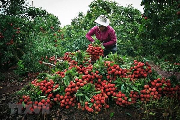 Nông sản Việt: Bài 2: Giữ vững và phát triển nông sản được bảo hộ