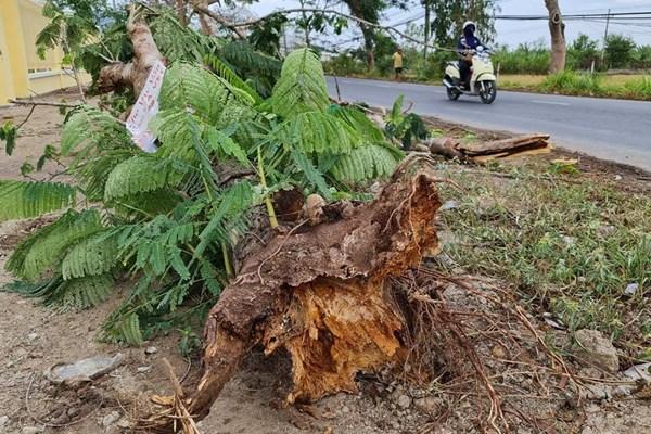 Mưa đầu mùa làm đổ cây khiến một người tử vong ở Sóc Trăng
