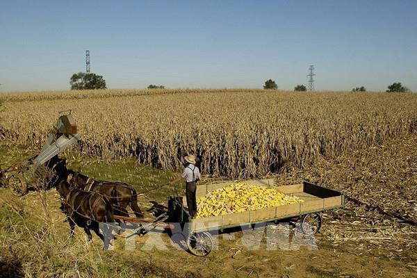 Thị trường nông sản Mỹ: Các mặt hàng giữ đà tăng trong phiên cuối tuần