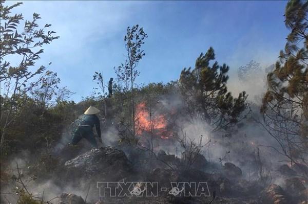 Nghệ An đã khống chế được vụ cháy rừng ở Diễn Châu